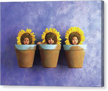 Sunflower Pots Canvas Print by Anne Geddes