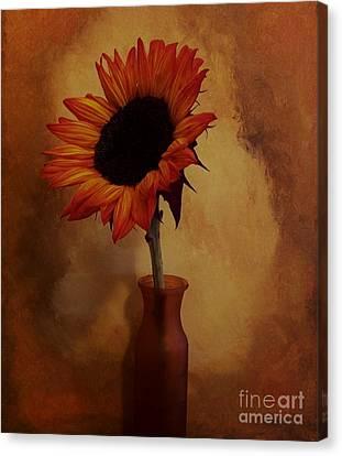 Sunflower Seed Maker Canvas Print by Marsha Heiken