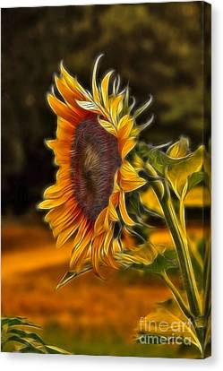 Sunflower Series Canvas Print by Wendy Mogul