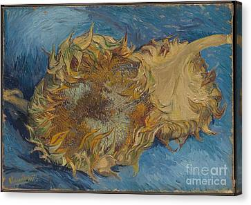 Sunflowers Canvas Print by Celestial Images