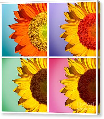 Sunflowers Collage Canvas Print by Mark Ashkenazi