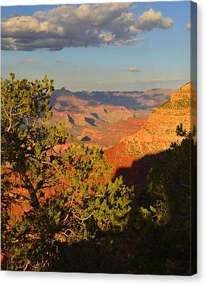 Sunkissed Afternoon Canvas Print by Stephen  Vecchiotti