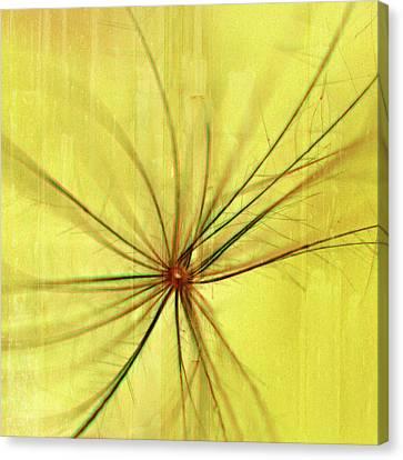 Sunny Canvas Print by Bonnie Bruno