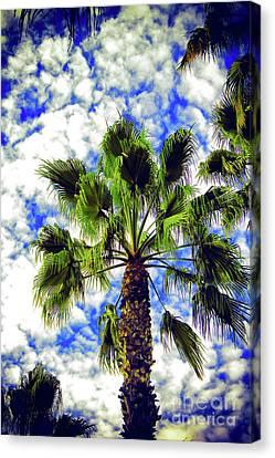 Sunny California Canvas Print by Mariola Bitner