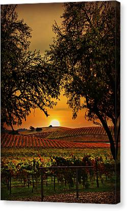 Sunrise Fall Vineyard Canvas Print by Stephanie Laird