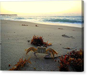 Sunrise Ghost Crab 2 7/29 Canvas Print by Mark Lemmon