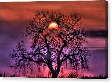 Sunrise Through The Foggy Tree Canvas Print by Scott Mahon