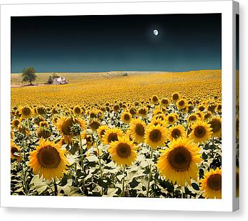 Suns And A Moon Canvas Print by Mal Bray