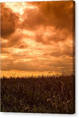 Sunset Corn Field Canvas Print by Wim Lanclus