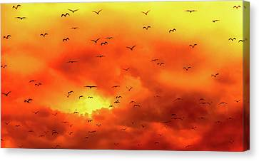 Sunset Flight Canvas Print by Optical Playground By MP Ray