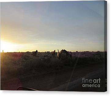 Sunset Horses Canvas Print by Frederick Holiday