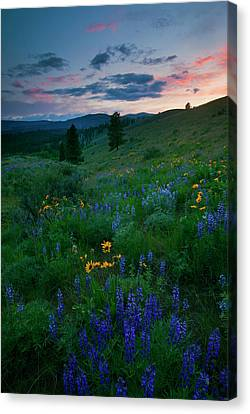 Sunset Meadow Trail Canvas Print by Mike  Dawson