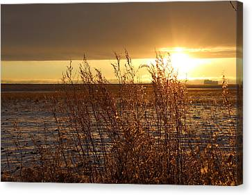 Sunset On Field Canvas Print by Christy Patino