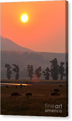 Sunset Over The Herd Canvas Print by Adam Jewell