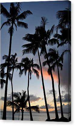 Sunset Palms Canvas Print by Kelly Wade