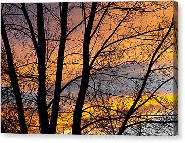 Sunset Through The Tree Silhouette Canvas Print by James BO  Insogna