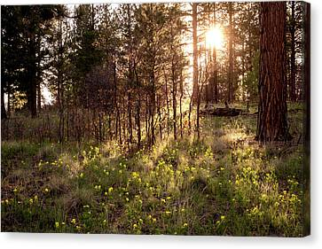 Sunshine And Lupine Canvas Print by Mary Lee Dereske