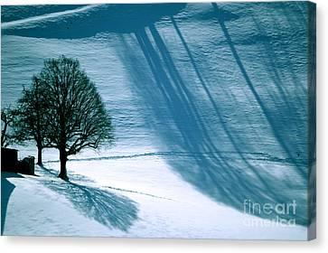 Sunshine And Shadows - Winterwonderland Canvas Print by Susanne Van Hulst