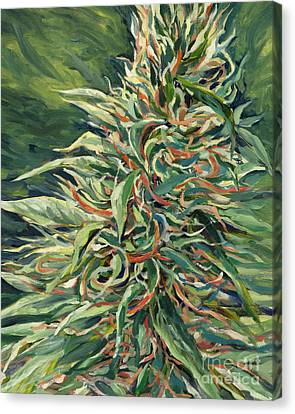 Super Silver Haze Canvas Print by Mary Jane