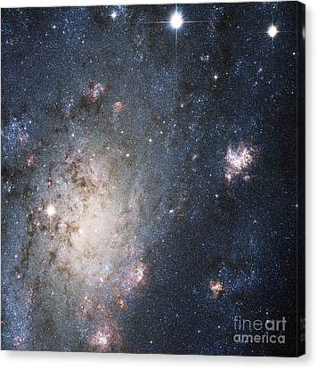 Supernova 2004dj, Outskirts Of Ngc 2403 Canvas Print by Science Source