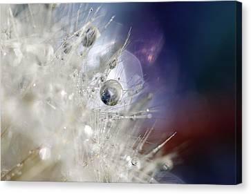 Supernova Canvas Print by Amy Tyler