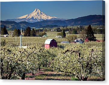 Surrounded By Beauty Canvas Print by Mike Dawson