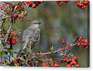 Surrounded By Berries Canvas Print by Fraida Gutovich