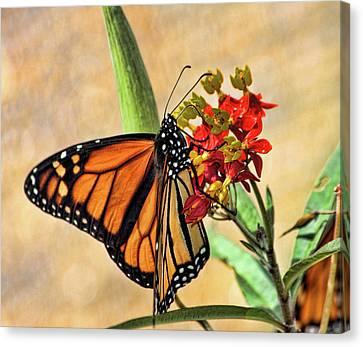 Sweet Nectar Canvas Print by Joetta West