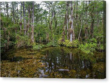Sweet Water Strand - 10 Canvas Print by Rudy Umans