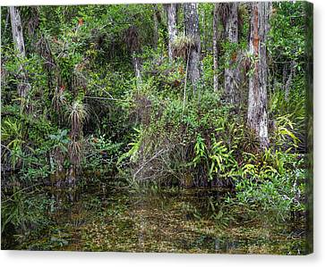 Sweet Water Strand - 11 Canvas Print by Rudy Umans