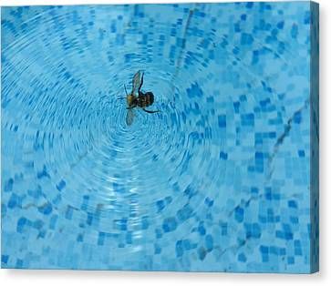 Swimming Bee Canvas Print by Kenneth Summers