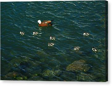 Swimming Lessons 2 Canvas Print by Terry Perham
