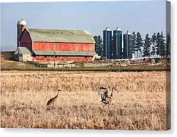Swiss Cranes Canvas Print by Todd Klassy