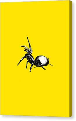 Sydney Funnel Web Canvas Print by Nicholas Ely