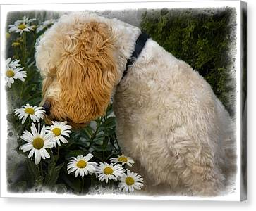 Taking Time To Smell The Flowers Canvas Print by Susan Candelario