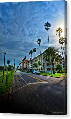 Tall Palms Canvas Print by Marvin Spates
