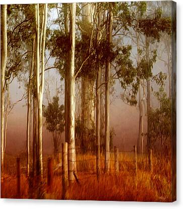Tall Timbers Canvas Print by Holly Kempe