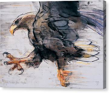 Talons   White Tailed Sea Eagle Canvas Print by Mark Adlington