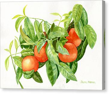 Tangerines With Leaves Canvas Print by Sharon Freeman