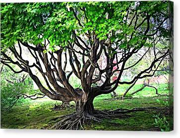 tangled Branches Canvas Print by Marty Koch