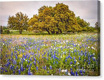 Tapestry Of Wildflowers At Willow City Loop - Texas Hill Country Canvas Print by Silvio Ligutti