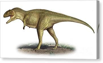Tarascosaurus Salluvicus, A Prehistoric Canvas Print by Sergey Krasovskiy