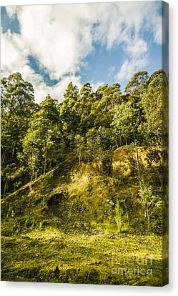 Tasmanian Rain Forest Glade Canvas Print by Jorgo Photography - Wall Art Gallery