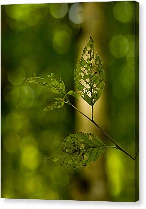Tattered Leaves Canvas Print by Mike Reid