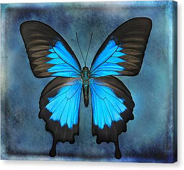 Teal Butterfly Canvas Print by Lisbet Sjoberg