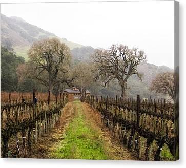 Tending The Grapes Canvas Print by Lynn Andrews