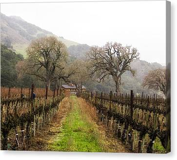 Tending The Grapes Canvas Print by Lynn Andrews