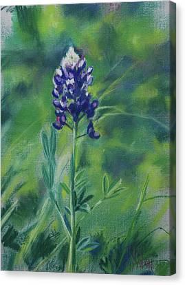 Texas Beauty Canvas Print by Billie Colson