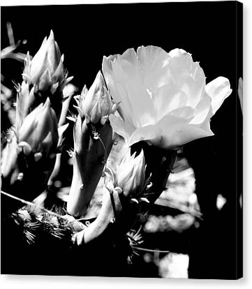 Texas Rose IIi Canvas Print by James Granberry