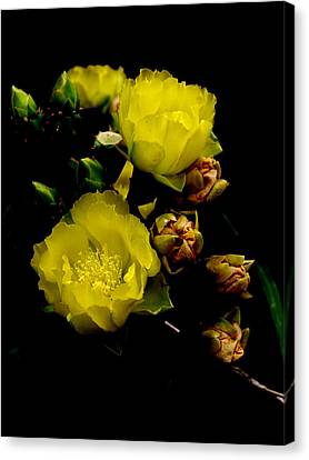 Texas Rose Vii Canvas Print by James Granberry